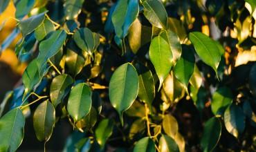 Πέντε φυτά για πολυκατοικία