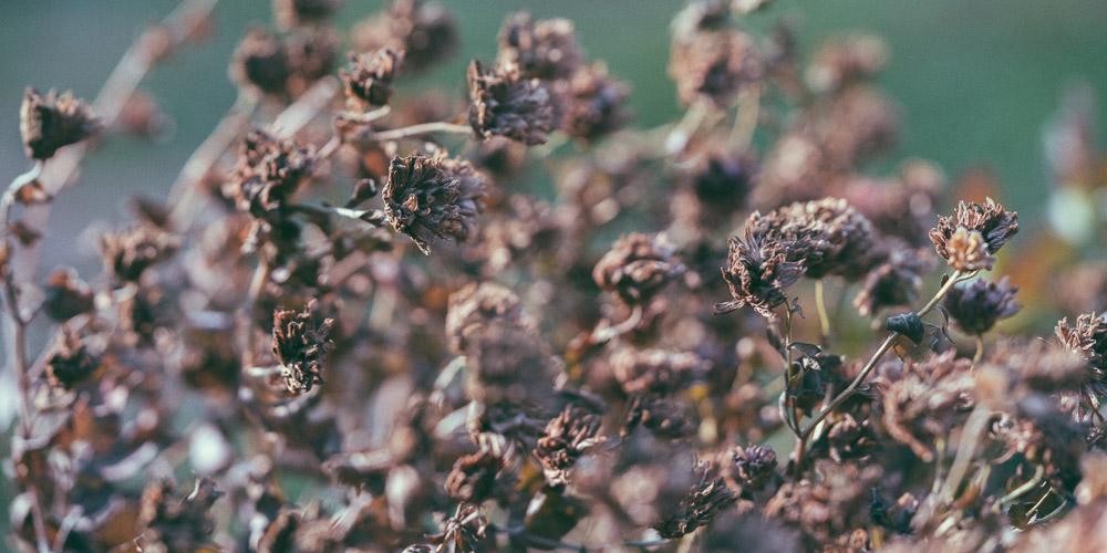 Προστασία φυτών από κρύο, χιόνι, παγετό