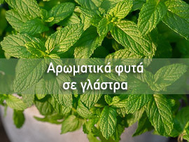 mistikakipou-aromatika-glastra-sl