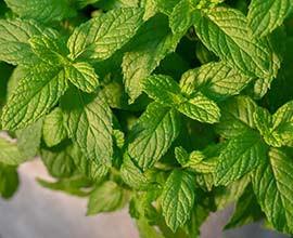 Αρωματικά φυτά σε γλάστρα