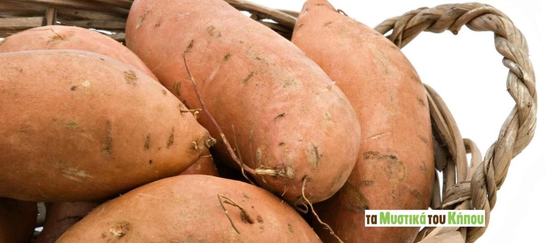 Sweet-Potatoes_mistikakipou
