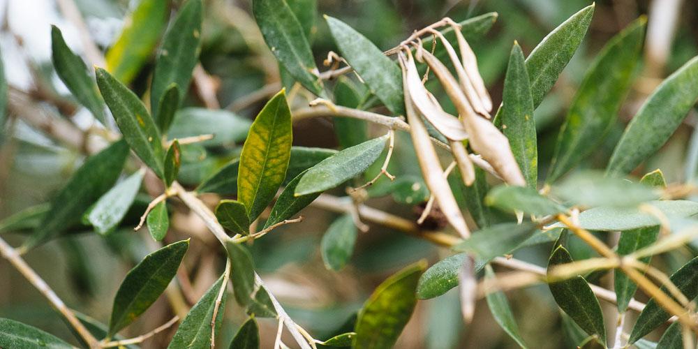 mistikakipou-michaliskoulieris-vorioelia