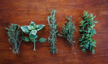Πέντε αρωματικά φύτα για μαγειρική