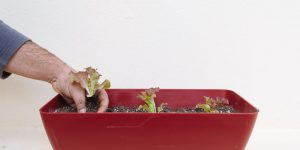 Ζαρντινιέρες για φύτευση κηπευτικών στο μπαλκόνι