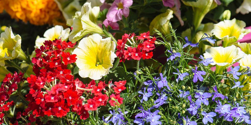 Δέκα ανθισμένα λουλούδια του Μάη