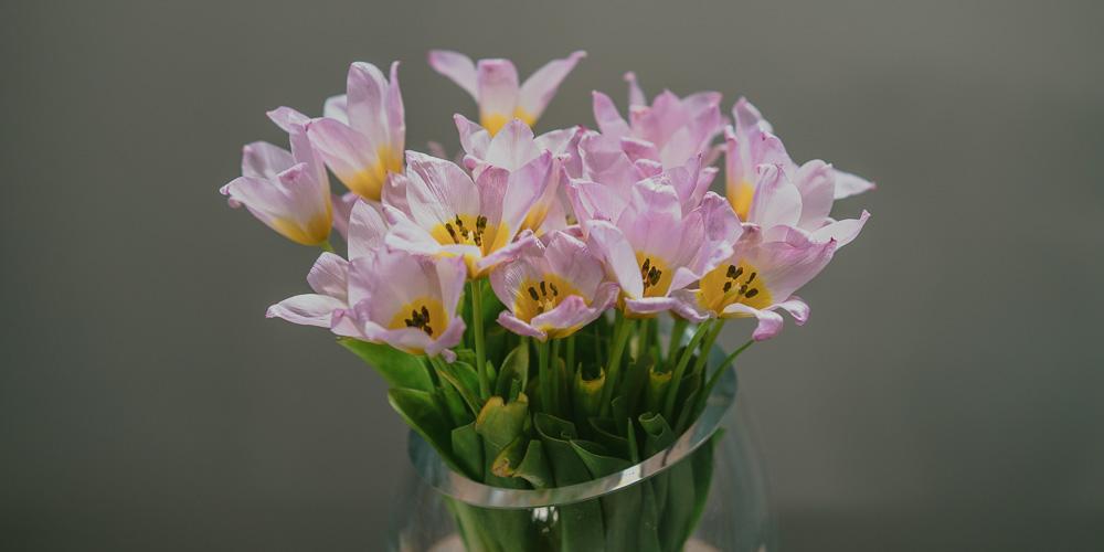 10 μυστικά για διατήρηση λουλουδιών σε βάζο