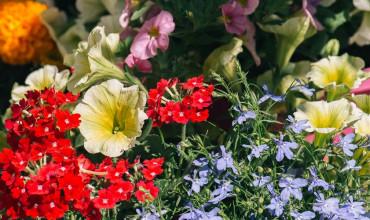 10 λουλούδια που ανθίζουν τον Μάιο