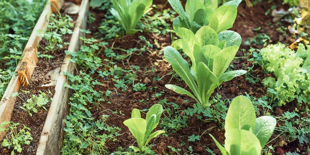 Αποστάσεις φύτευσης στον ανοιξιάτικο λαχανόκηπο