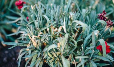 Προστατέψτε τα φυτά στον καύσωνα