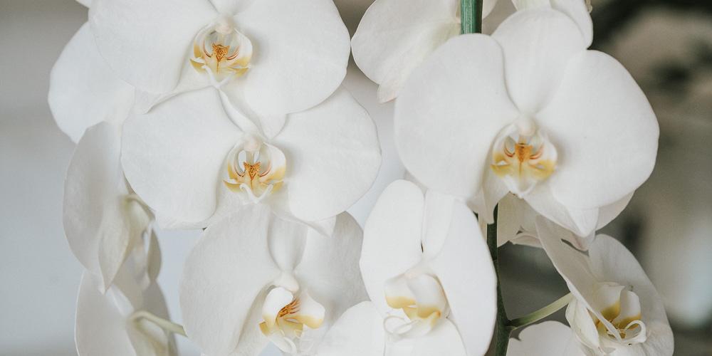 6 μυστικά για τη φροντίδα της ορχιδέας