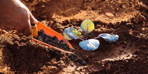 Κοπριά, ένα φυσικό οικολογικό λίπασμα