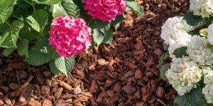 Πευκόφλουδα, χρήσεις στον κήπο