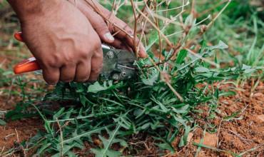 6 μυστικά για καλλιέργεια σταμναγκαθιού