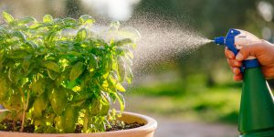 3 οικολογικοί τρόποι για την προστασία των φυτών με φυσικά υλικά