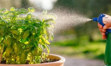 Τρεις οικολογικοί τρόποι προστασίας φυτών