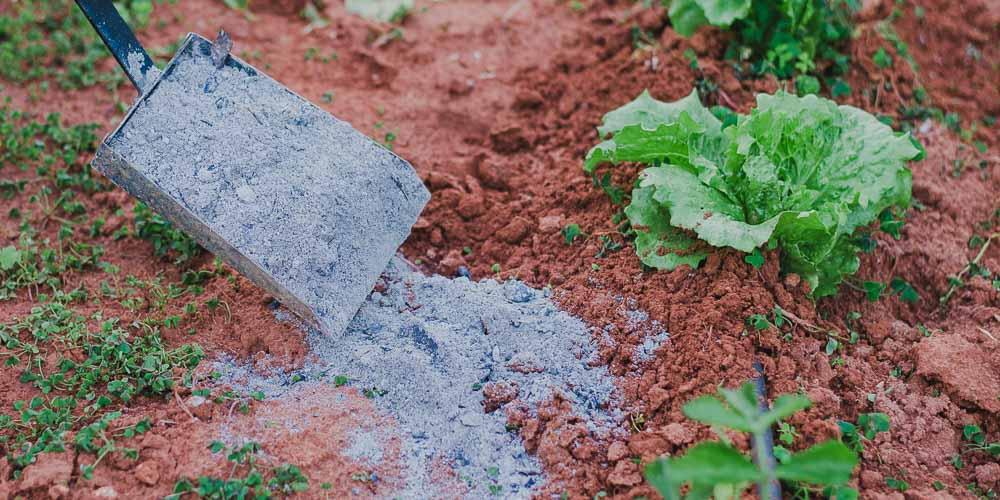 Στάχτη, χρήσεις στον κήπο