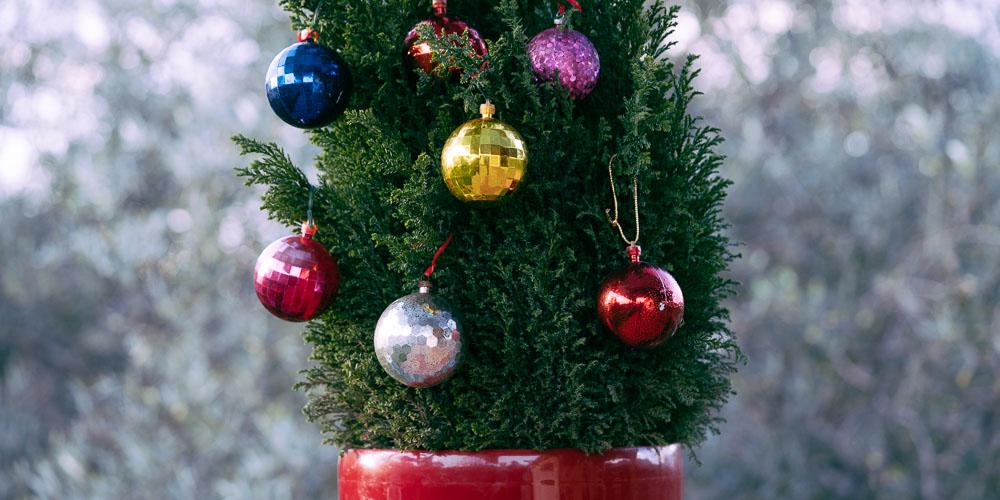 Χριστουγεννιάτικο δέντρο σε γλάστρα
