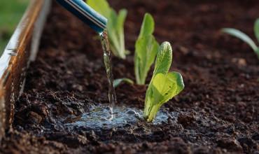 5 μυστικά για σωστό πότισμα και υγιή φυτά