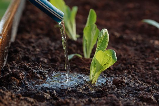 10 μυστικά για σωστό πότισμα και υγιή φυτά