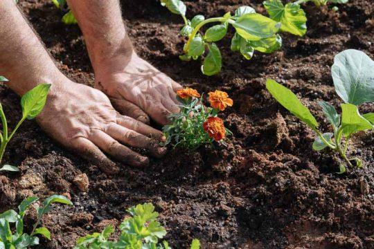 Απρίλιος, εργασίες στον κήπο
