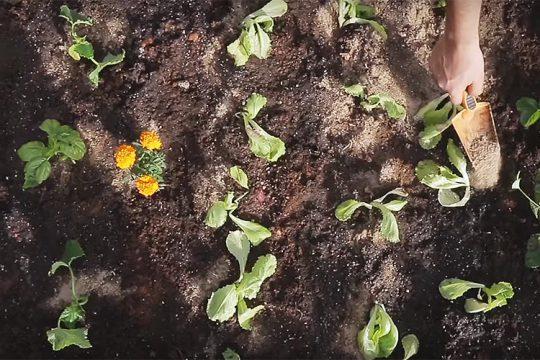 Πώς φτιάχνουμε ένα μικρό λαχανόκηπο