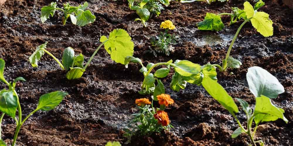 Δημιουργία λαχανόκηπου και καλλιέργεια λαχανικών