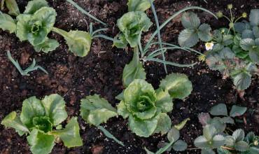 Εποχή σποράς, φύτευσης και περίοδος συγκομιδής για 30 λαχανικά