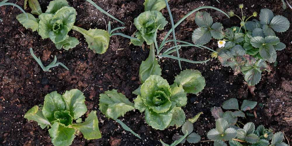 Εποχή σποράς, φύτευσης και περίοδος συγκομιδής για τα λαχανικά