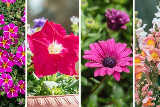 10 λουλούδια που ανθίζουν τον Μάϊο σε κήπο και σε γλάστρα