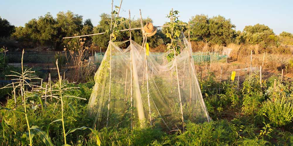 Εργασίες στον κήπο για τον Αύγουστο