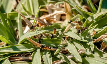 5 φυσικοί τρόποι αντιμετώπισης των μυρμηγκιών στον κήπο