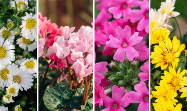 10 λουλούδια που ανθίζουν το φθινόπωρο