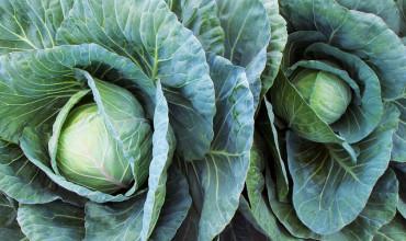 5 μυστικά για καλλιέργεια λάχανου