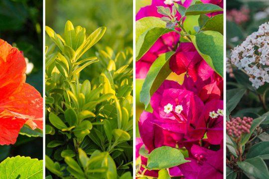 Φυτά για παραθαλάσσια μέρη