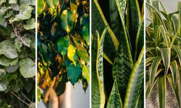 Φυτά που καθαρίζουν τον αέρα