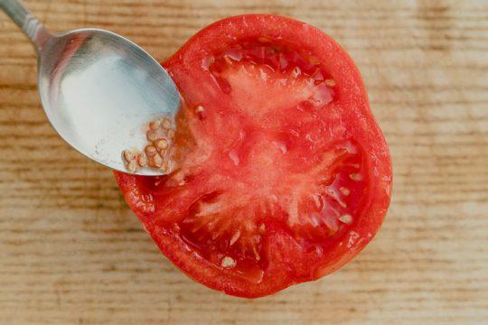 Πώς κρατάμε σπόρο ντομάτας (+video)