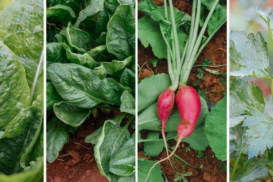 Τα 10 πιο εύκολα φθινοπωρινά λαχανικά για καλλιέργεια σε κήπο και γλάστρα