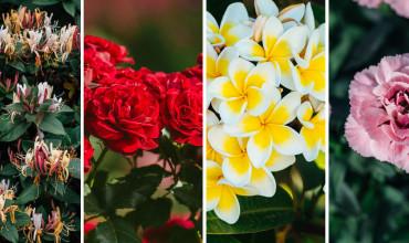 10 λουλούδια με έντονο άρωμα που μυρίζει υπέροχα