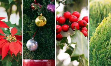 Τα πιο δημοφιλή χριστουγεννιάτικα φυτά