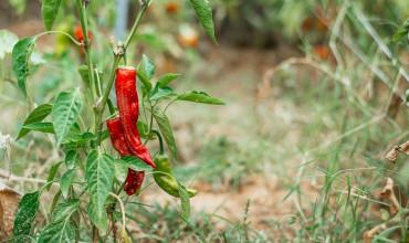 5 μυστικά για αντιμετώπιση εντόμων και ασθενειών στοv λαχανόκηπο