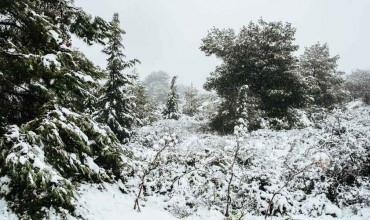Προστασία φυτών από χιόνι, κρύο, παγετό