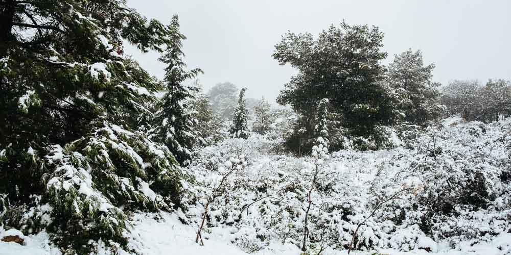 Πώς προστατεύουμε τα φυτά από χιόνι, κρύο, παγετό