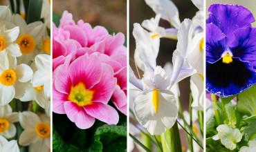 Τα 10 πιο όμορφα χειμωνιάτικα λουλούδια