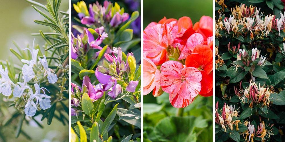 Πώς φτιάχνουμε κήπο με ανθισμένα λουλούδια όλο τον χρόνο