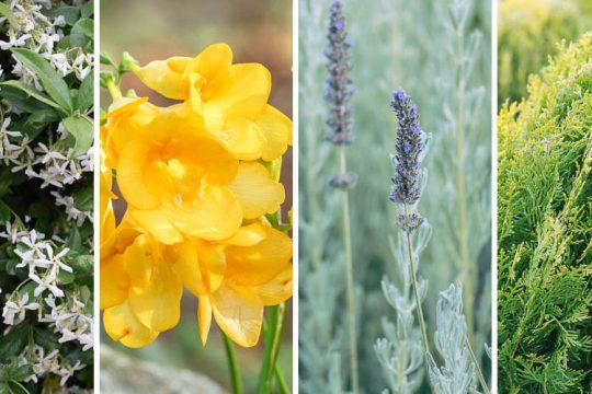 Φυτά ανθεκτικά στο κρύο
