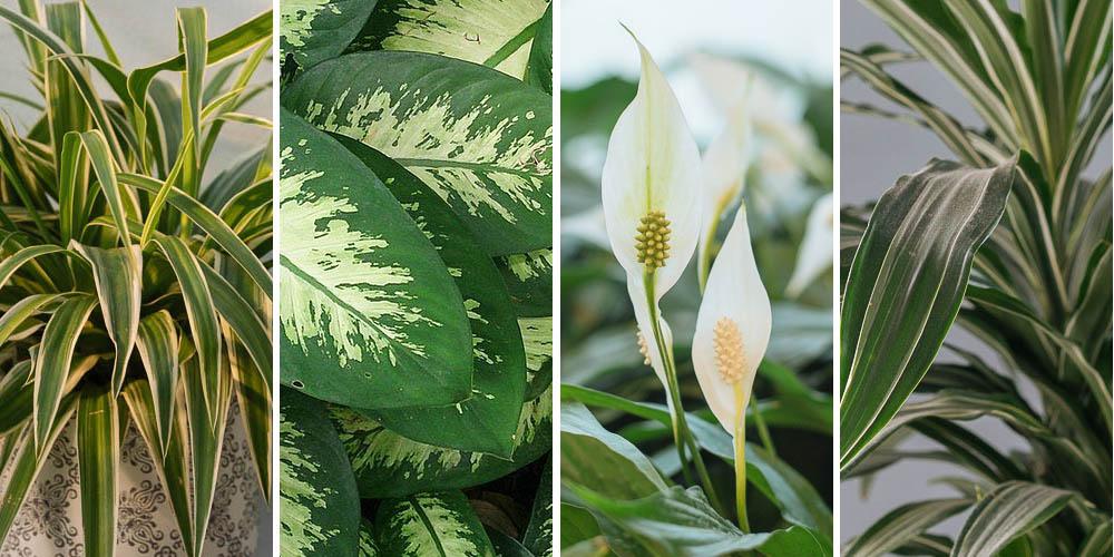 6 φυτά εσωτερικού χώρου που δεν χρειάζονται πολύ φως