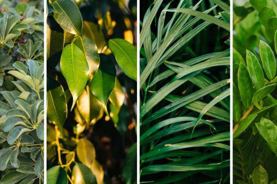 5 εντυπωσιακά φυτά για πολυκατοικία και επαγγελματικό χώρο