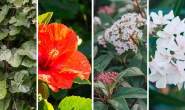 Ανθεκτικά φυτά για πόλεις και περιοχές με έντονη ατμοσφαιρική ρύπανση