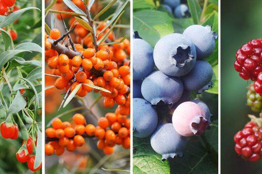 Καλλιέργεια superfood σε κήπο και μπαλκόνι