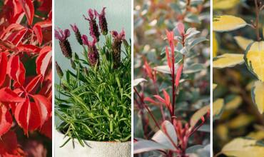 10 ανθεκτικά φυτά για μπαλκόνι